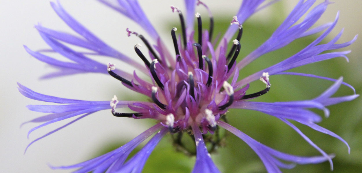 leonie-cornelius-cornflower-garden-design