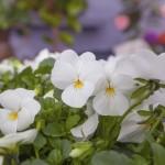 Garden-designer-leonie-cornelius-irish-independent-weekend-magazine