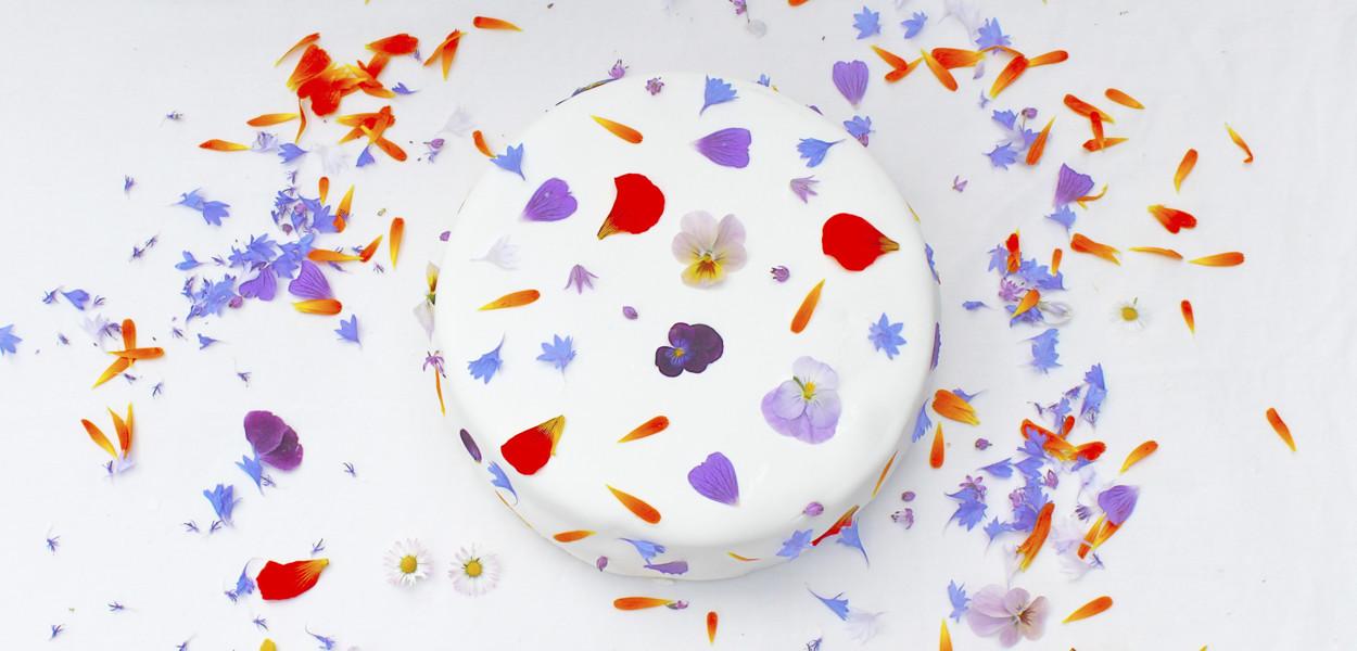 cake-shells-surf-cafe-leonie-cornelius