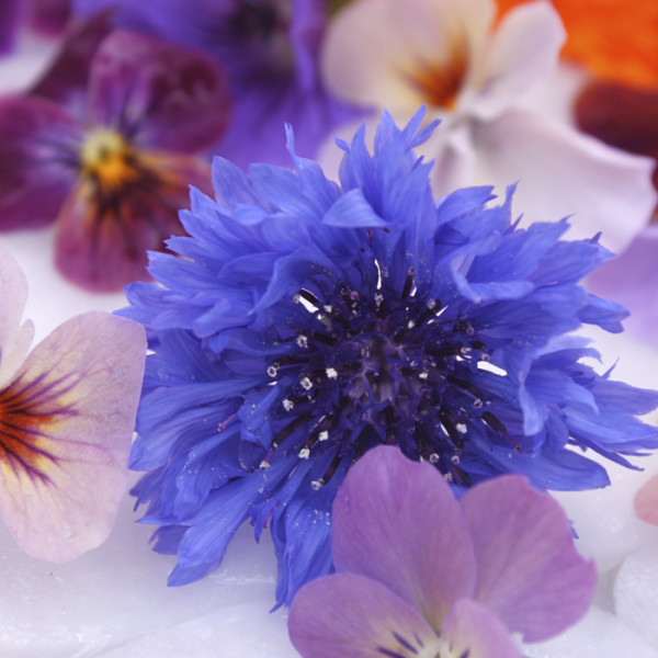 leonie-cornelius-garden-design-1