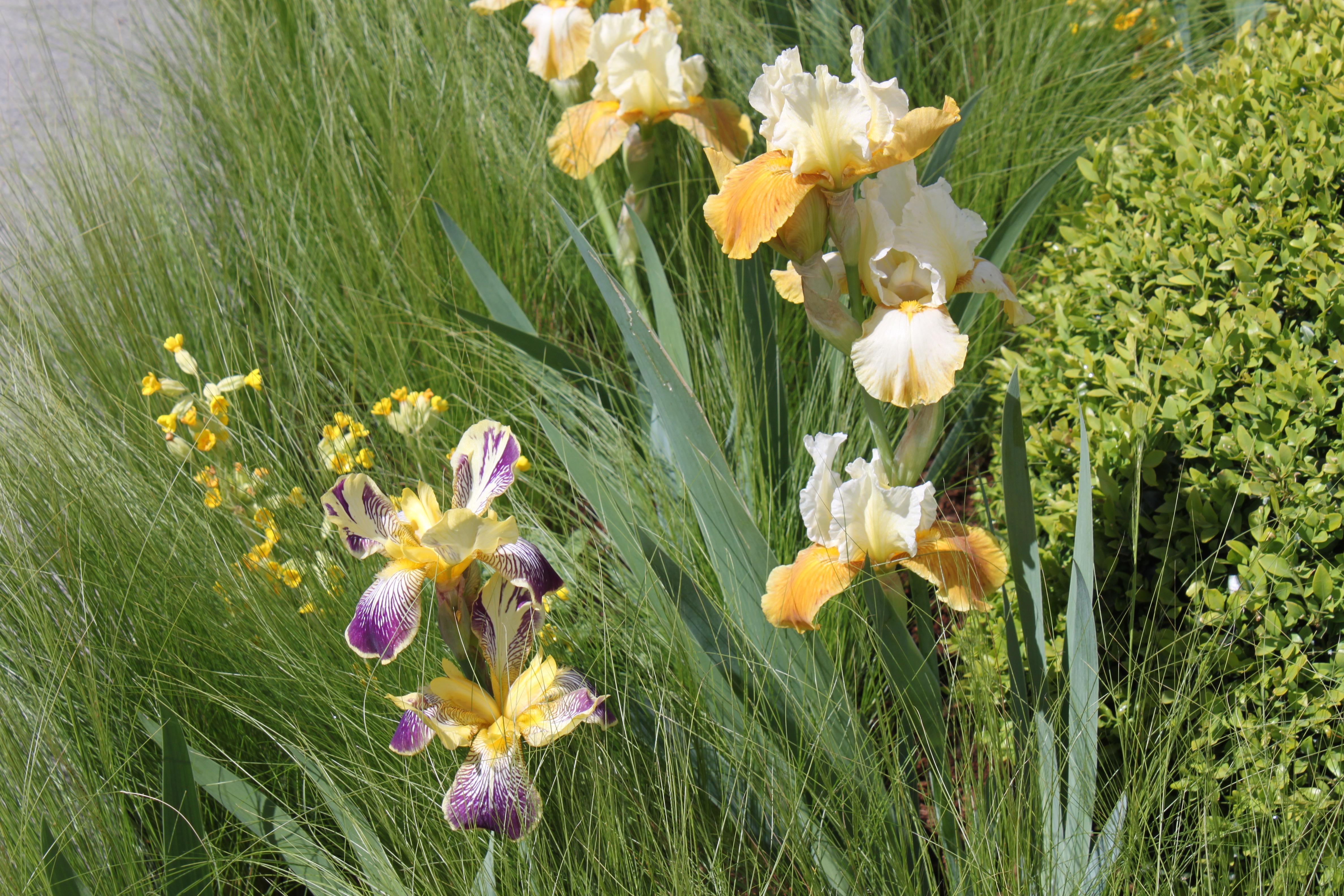 leonie-cornelius-bloom-niall-maxwell