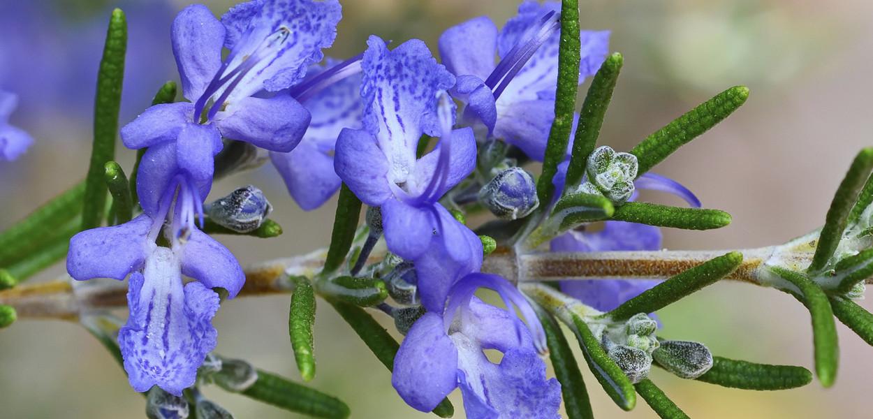 leonie-cornelius-salt-scrub-beauty-colin-gillen-rosemary