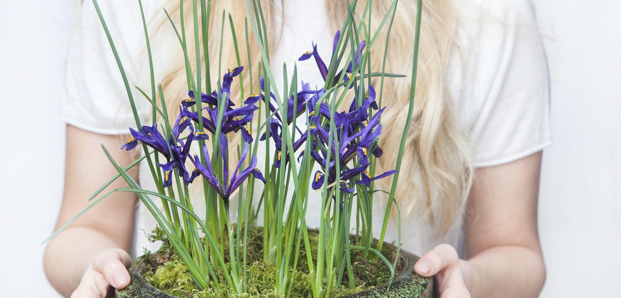 leonie-cornelius-iris-colin-gillen-L'Occitane-chelsea-scapedesign