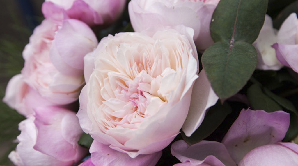 leonie-cornelius-rose-de-mai-colin-gillen-L'Occitane-chelsea-magee.3