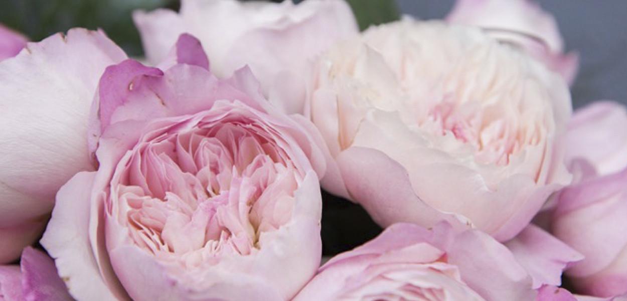 leonie-cornelius-rose-de-mai-colin-gillen-L'Occitane-chelsea-magee.7