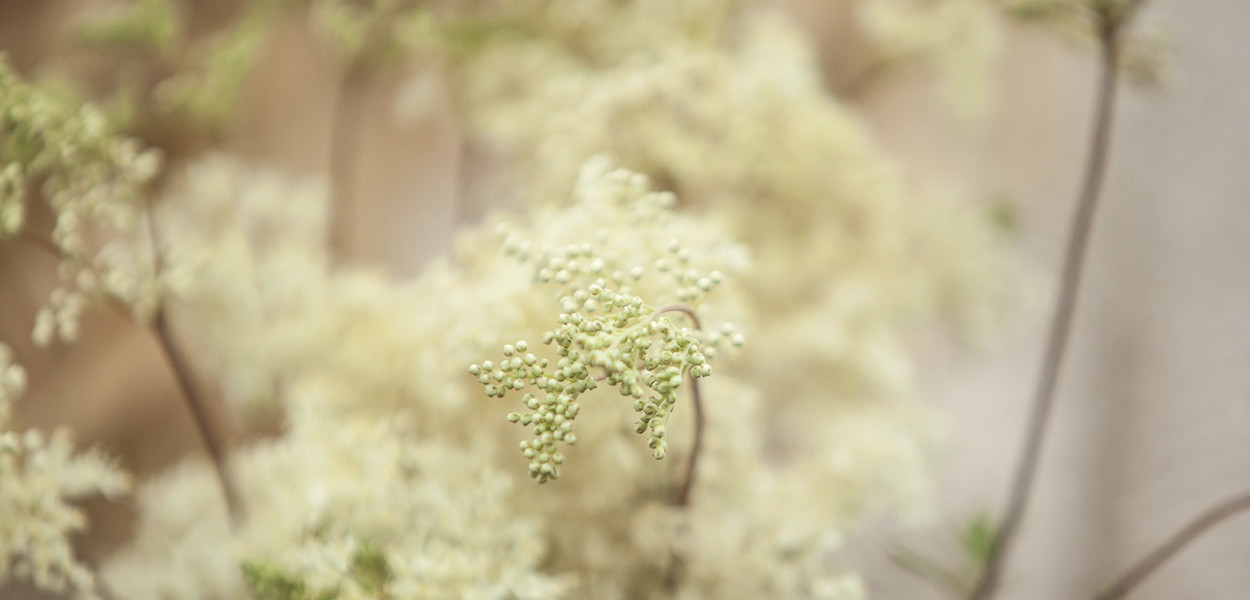 leonie-cornelius-garden-designer-meadowsweet