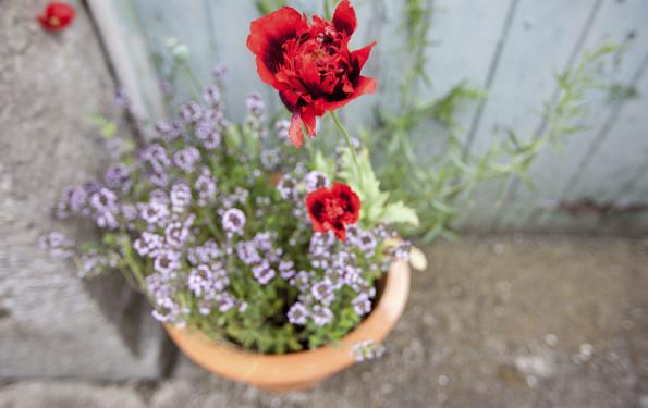leonie-cornelius-colin-gillen-irish-mail-on-sunday-ballymaloe-garden-2