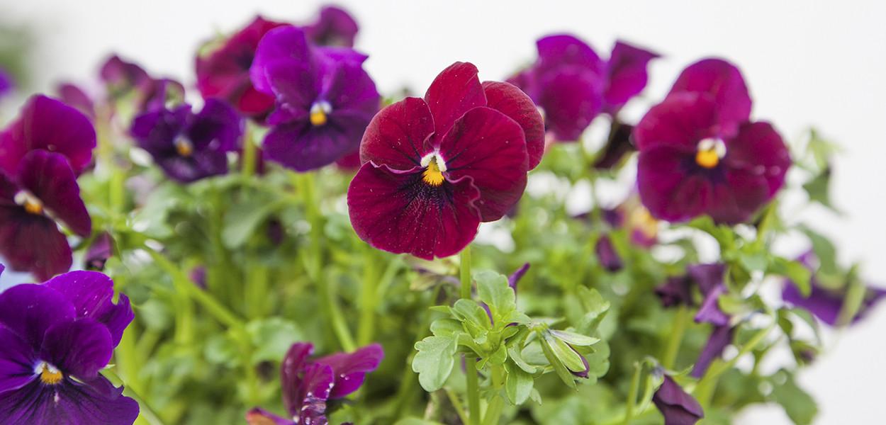 leonie-cornelius-garden-designer-super-garden-rte-woodies-colin-gillen-2