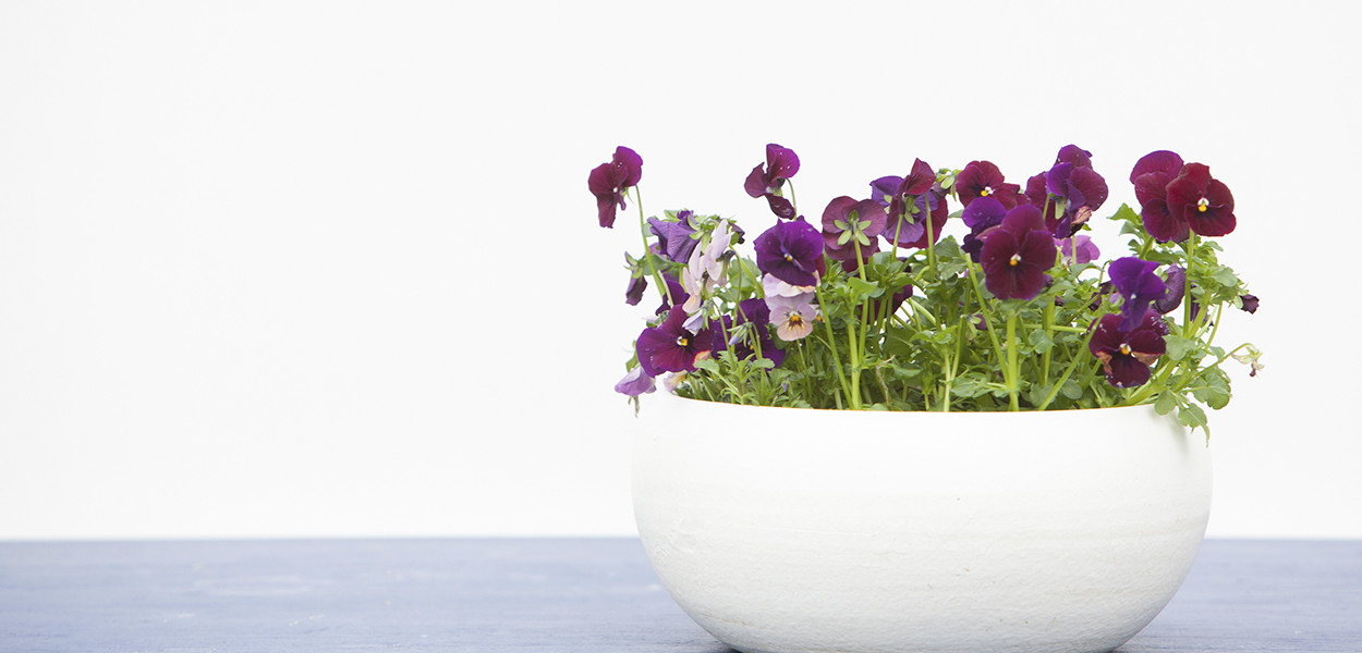 leonie-cornelius-garden-designer-super-garden-rte-woodies-colin-gillen-3