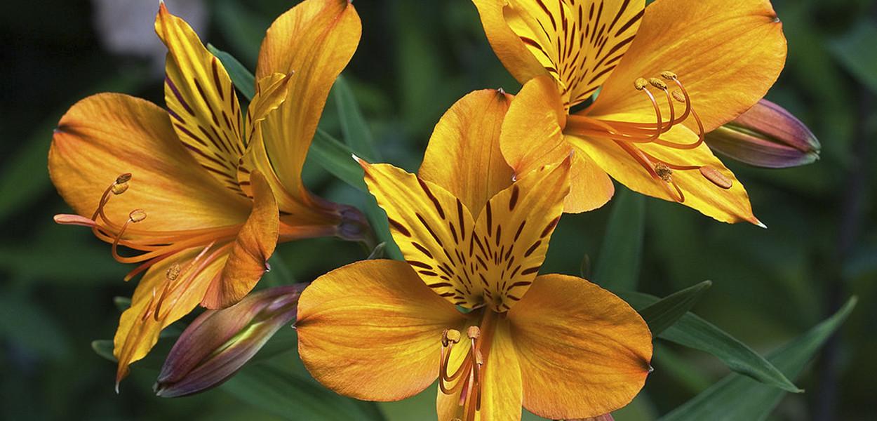 leonie-cornelius-garden-designer-super-garden-rte-woodies-colin-gillen-4