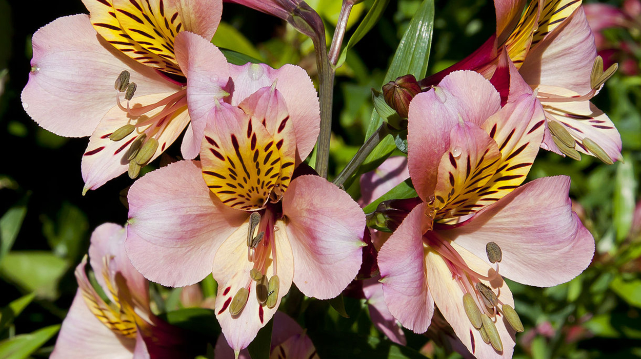 leonie-cornelius-garden-designer-super-garden-rte-woodies-colin-gillen3