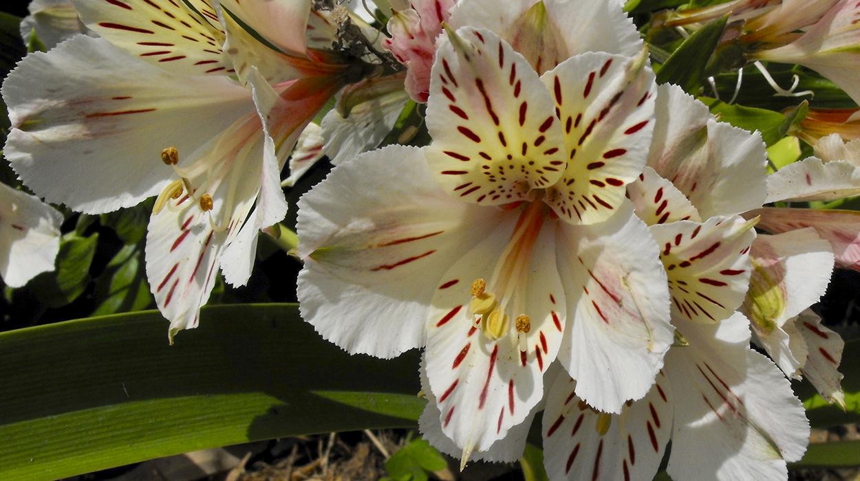 leonie-cornelius-garden-designer-super-garden-rte-woodies-colin-gillen5