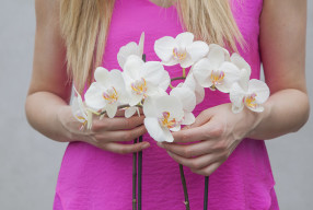 A touch of the Tropics | The beautiful Orchid