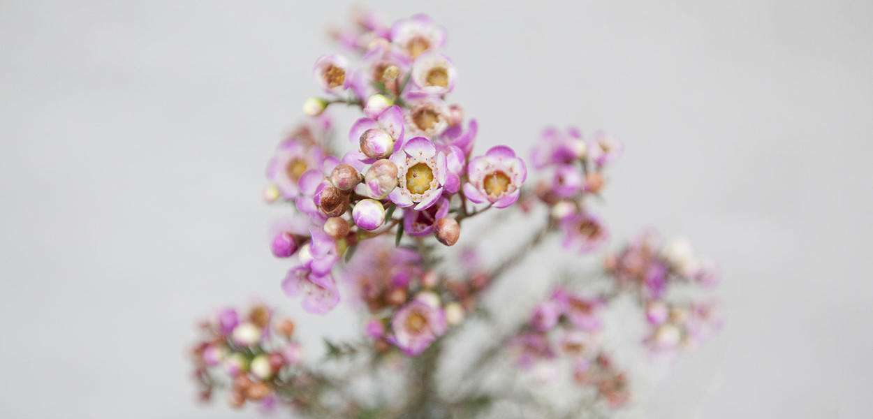 leonie-cornelius-colin-gillen-valentines-day-blog-supergarden-bloominthepark-woodies-4