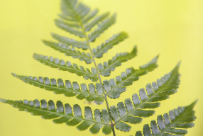 Ferns | Magical shade loving ancients