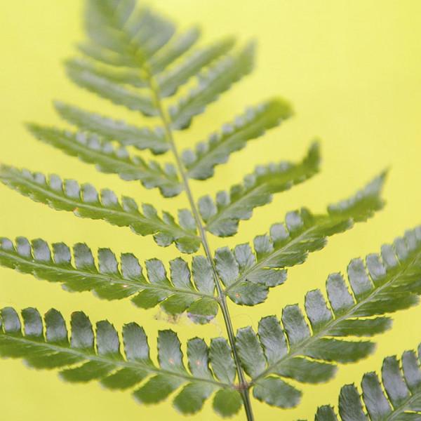 leonie-cornelius-colin-gillen-ferns-rte-super-garden-bloom-woodies-2