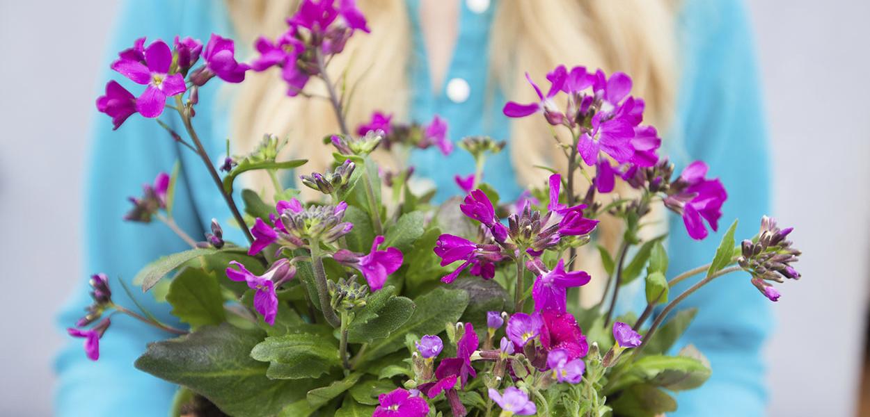 leonie-cornelius-colin-gillen-rockery-rte-super-garden-bloom-woodies-1