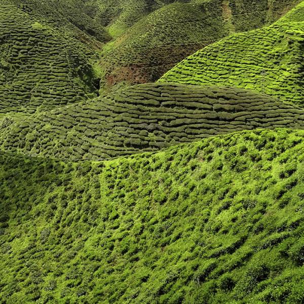 leonie-cornelius-colin-gillen-tea-therapy-rte-super-garden-bloom-woodies-1psd