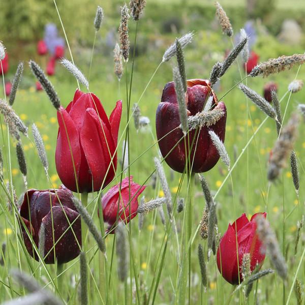 leonie-cornelius-june-blakes-garden-tearoom-dara-craul-rte-super-garden-bloom-woodies-1