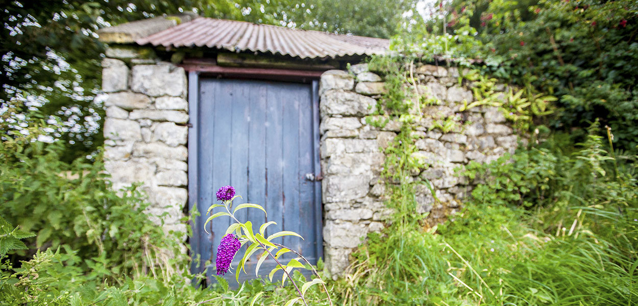leonie-cornelius-buddleja-irish-mail-on-sunday-garden-column-designer
