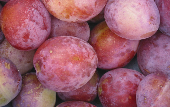 leonie-cornelius-garden-recipe-plum-damson-fruit-trees