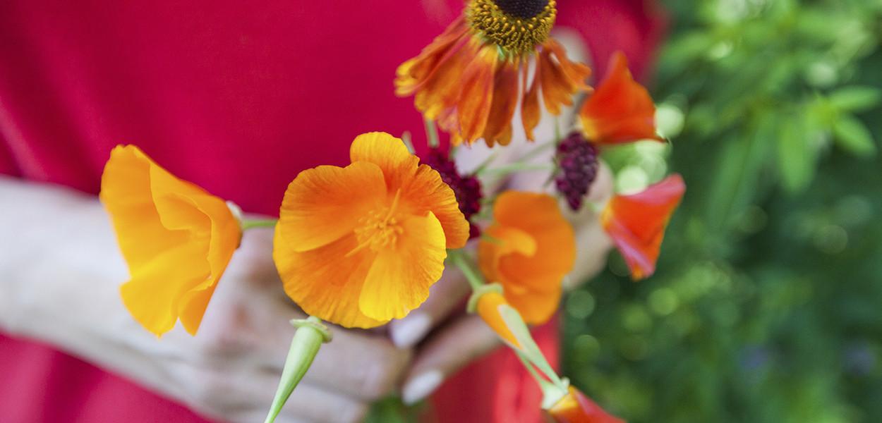leonie-cornelius-colin-gillen-garden-design-californian-poppy3