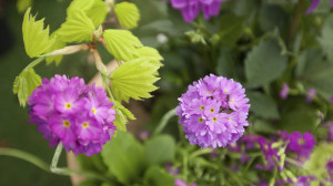 leonie-cornelius-garden-designer-ireland-horkans-bloom-chelsea-3