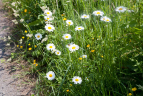 WILD & FREE- Native hedgerows series Part 4