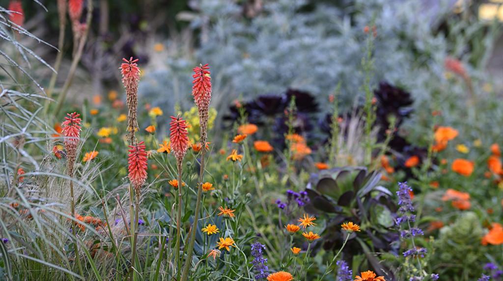 leonie-cornelius-jimi-blake-garden-design-huntigbrook2