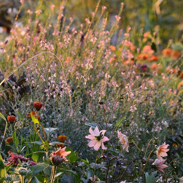 leonie-cornelius-jimi-blake-garden-design-huntigbrook3