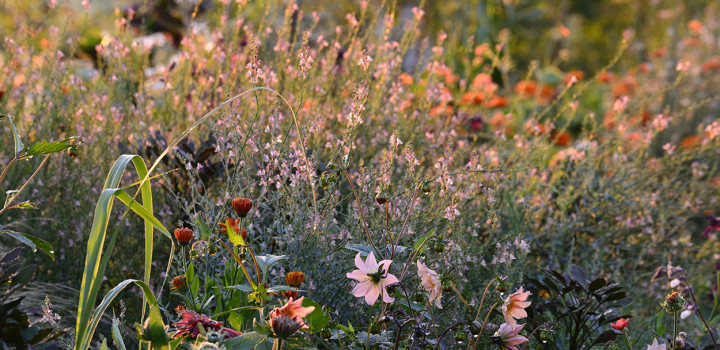 Master of Jewels | Garden advice from Jimi Blake