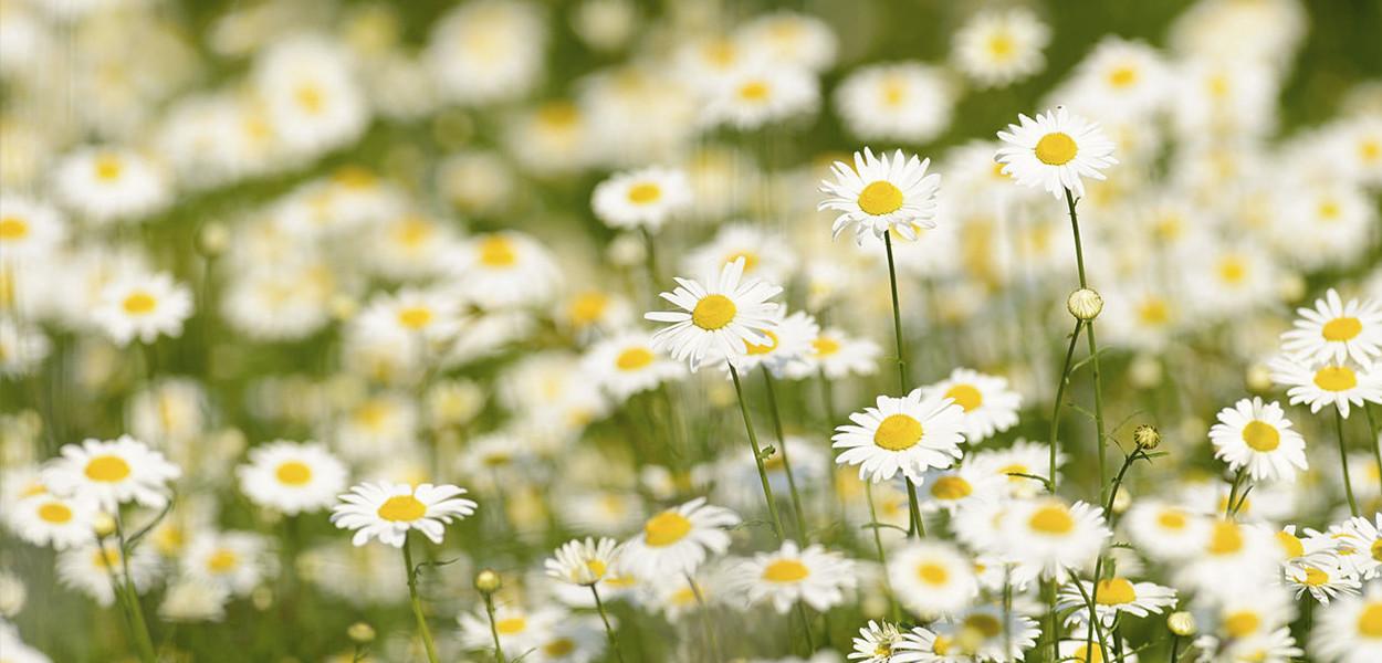 leonie-cornelius-goalwhatonearth-goalglobal-daisy-3