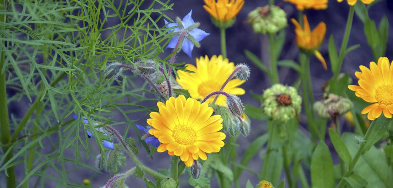 leonie-cornelius-garden-designer-ireland-w8village-catandthemoon-sligo-leitrim-10