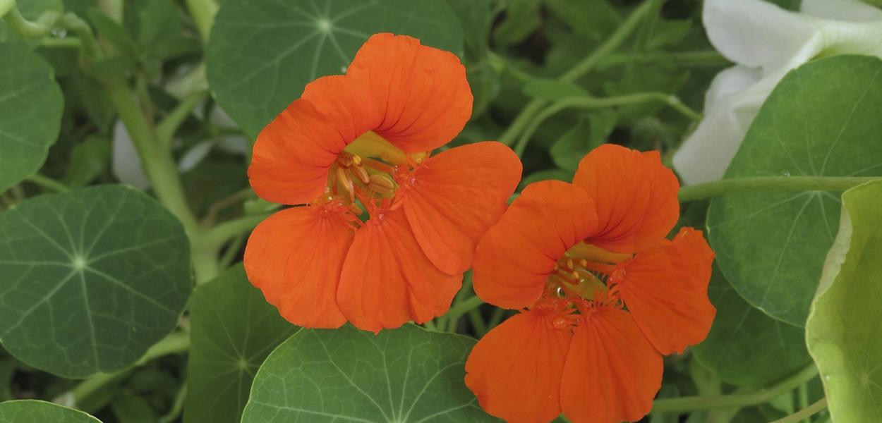 leonie-cornelius-garden-designer-ireland-w8village-catandthemoon-sligo-leitrim-12