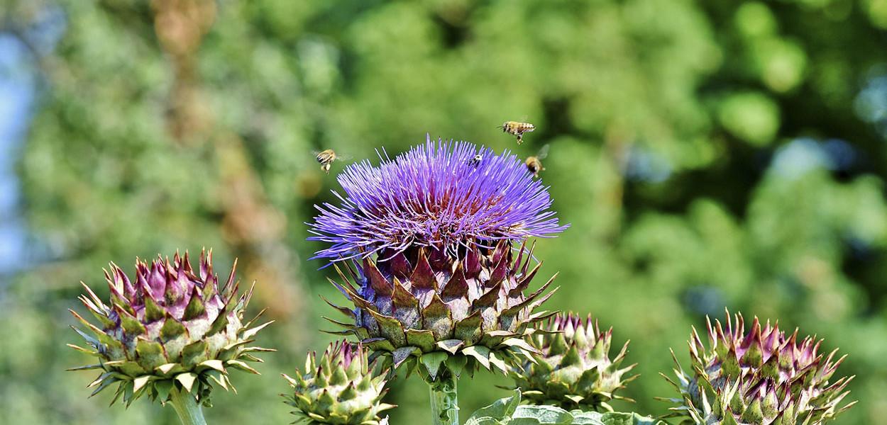 leonie-cornelius-garden-designer-ireland-w8village-catandthemoon-sligo-leitrim-9