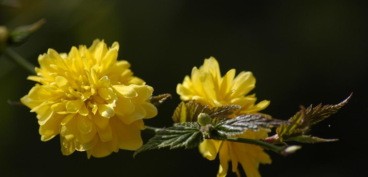 leonie-cornelius-winter-garden-designer-goal-martina-hamilton4