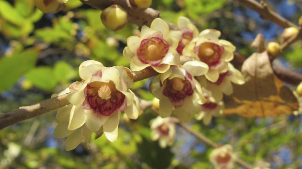 leonie-cornelius-winter-garden-designer-goal-martina-hamilton8