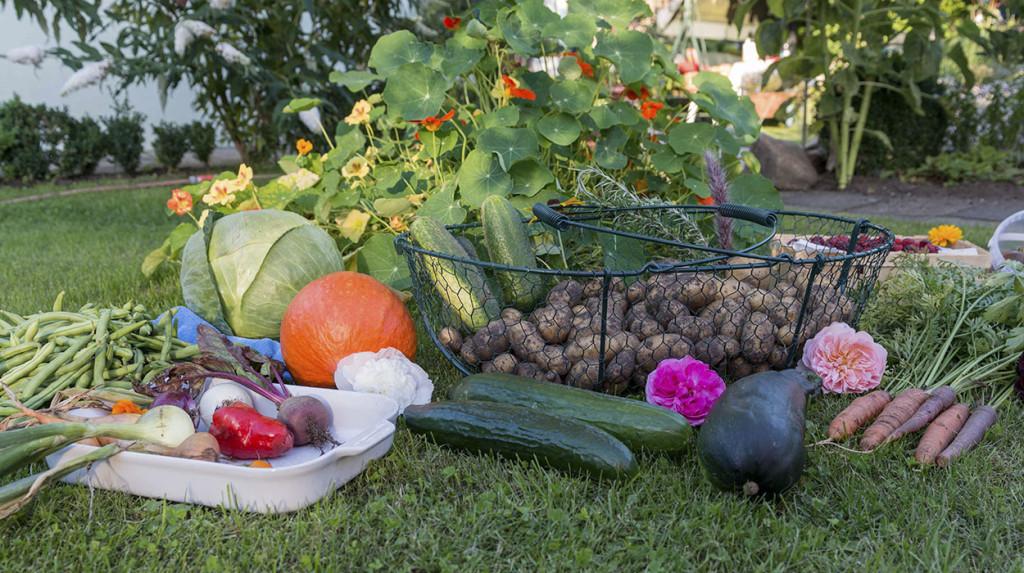 leonie-cornelius-garden-designer-ireland-kithchen-garden-detox-fitness2