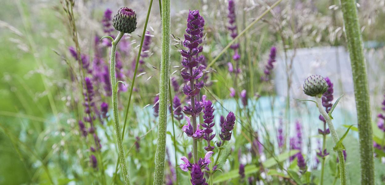 leonie-cornelius-garden-designer-main-pic