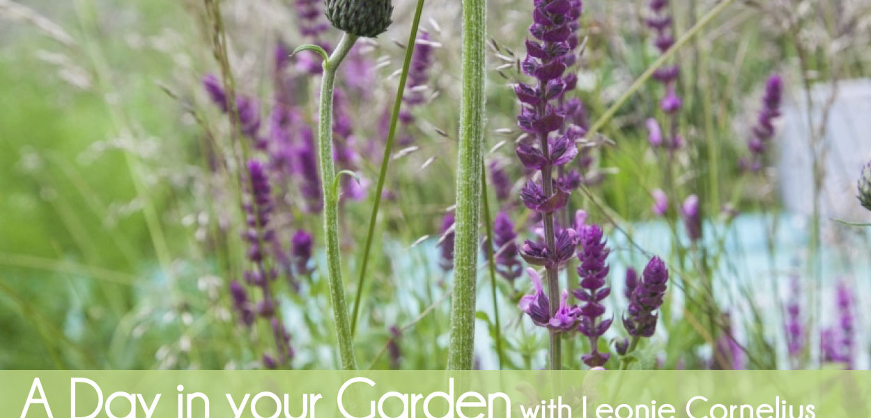 'A day in Your Garden'  New package