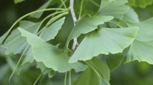 leonie-cornelius-garden-designer-leaf-shapes-colingillen-lisarichards-wildatlanticway3