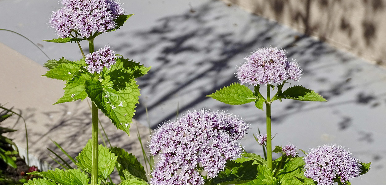 leonie-cornelius-w8village-manorhamilton-garden-design-4
