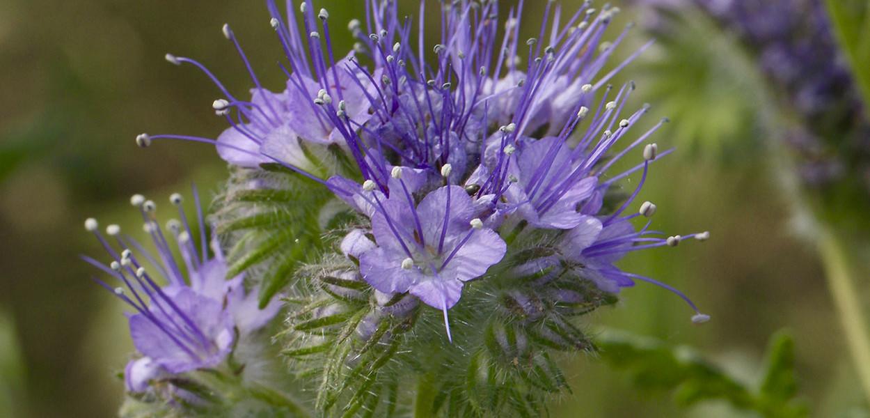 leonie-cornelius-garden-designer-ireland-3