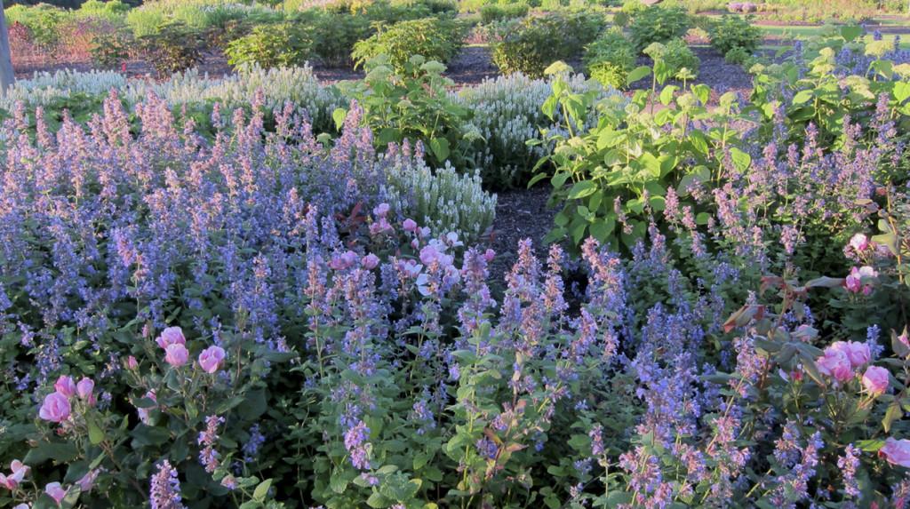 erysimum-garden-design-leonie-cornelius-2