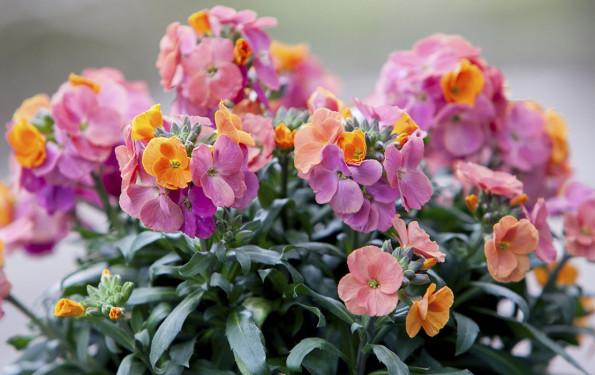 leonie-cornelius-garden-designer-ireland-kithchen-garden-detox-fitness-5