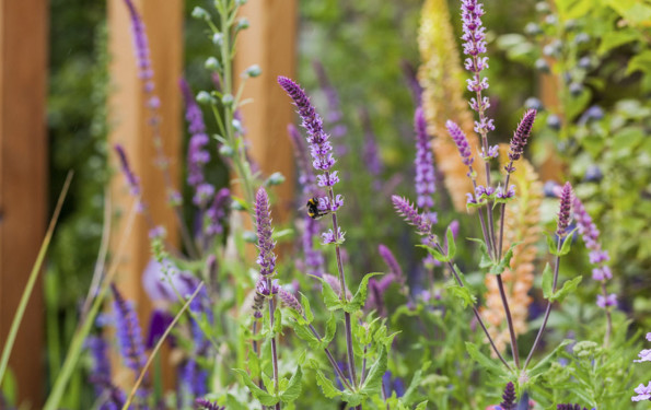 leonie-cornelius-japanese-bloom-in-the-park-dublin-bord-bia1