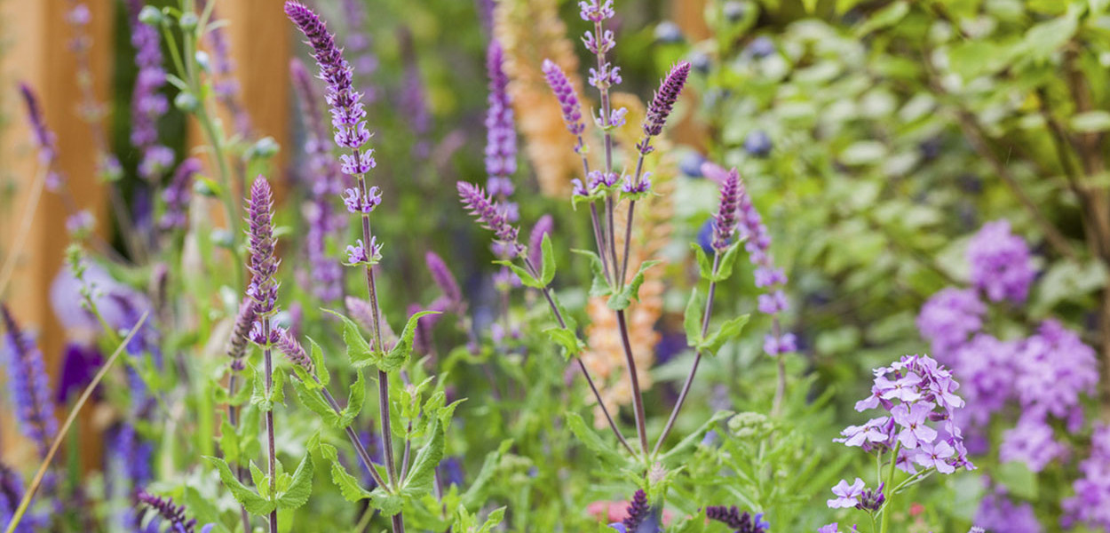 leonie-cornelius-japanese-bloom-in-the-park-dublin-bord-bia15