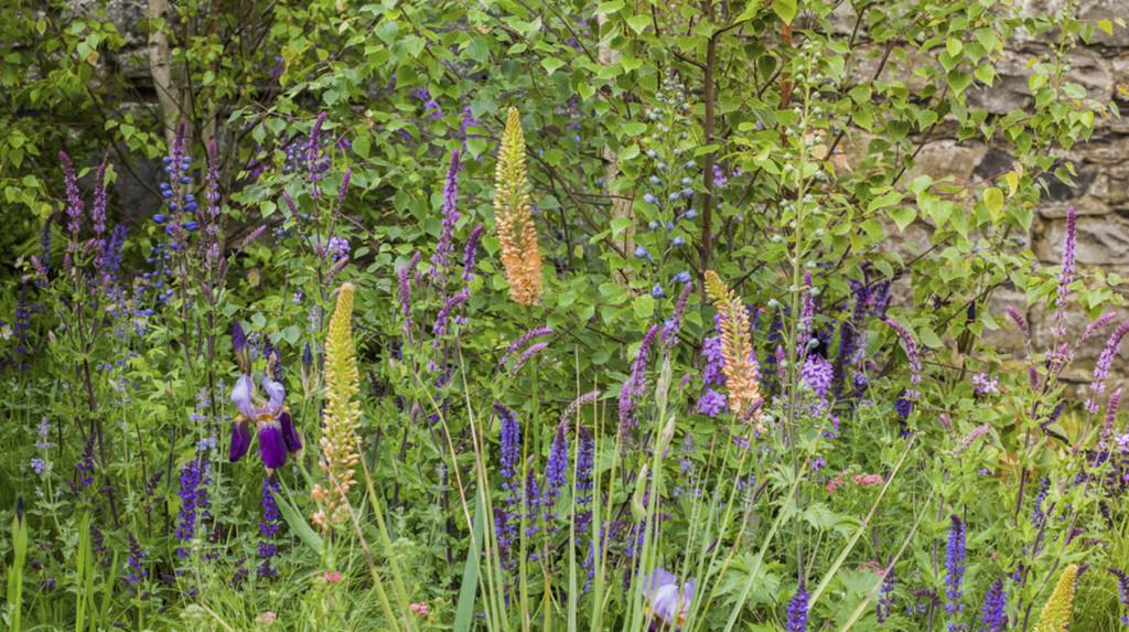 leonie-cornelius-japanese-bloom-in-the-park-dublin-bord-bia8