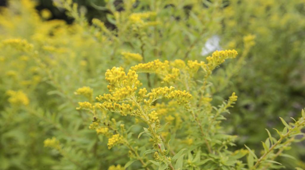 leonie-cornelius-medicinal-garden-design1