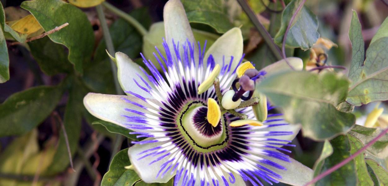 leonie-cornelius-medicinal-garden-design3